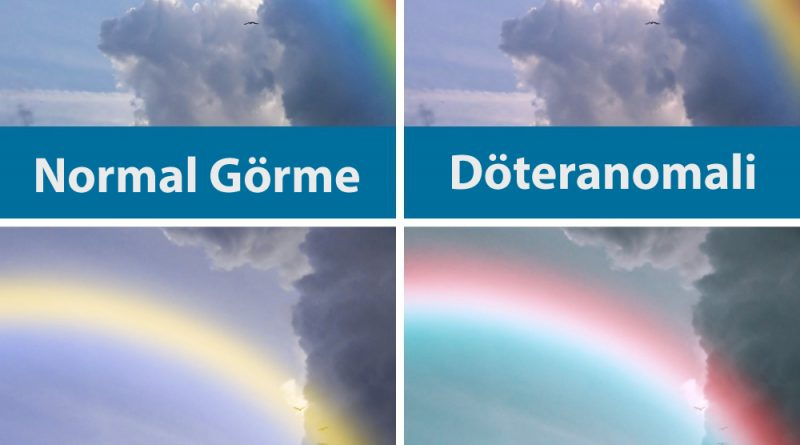 Renk Körlüğü Olanlar Renkleri Nasıl Görüyor Sinirbilim