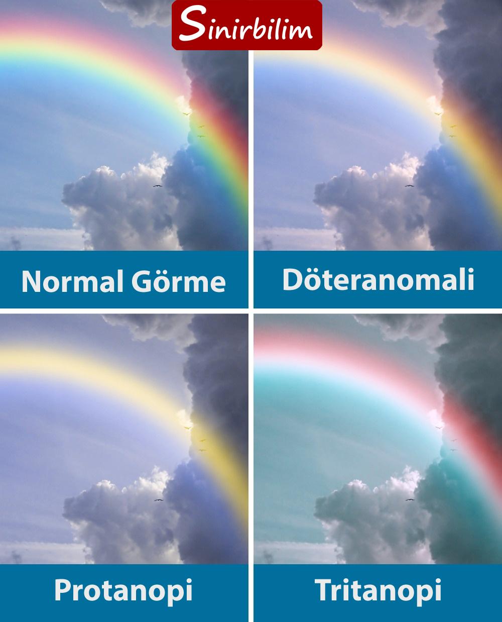 Renk Körlüğü Olanlar Renkleri Nasıl Görüyor