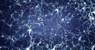 AGRP Nöronları Diyet Sırasında Yağ Yakımını Önlüyor!