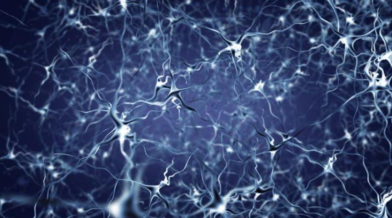 Beyin Hücrelerimiz Diyet Sırasında Yağ Yakımını Önlüyor!