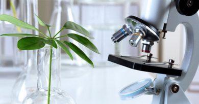 Bitkisel İlaçlar Yararlı mı Yoksa Tehlikeli mi?
