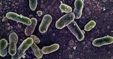 Salmonella Beyin Tümörlerini Yemek İçin Programlandı