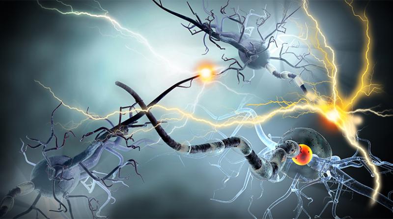 Yaşlanmanın Etkisi Glia Hücrelerini Daha Fazla Etkiliyor