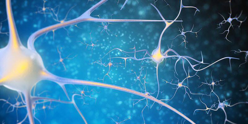 Beynin Enerji ve İletişim Ağında Çalışan Bir Protein: BDNF