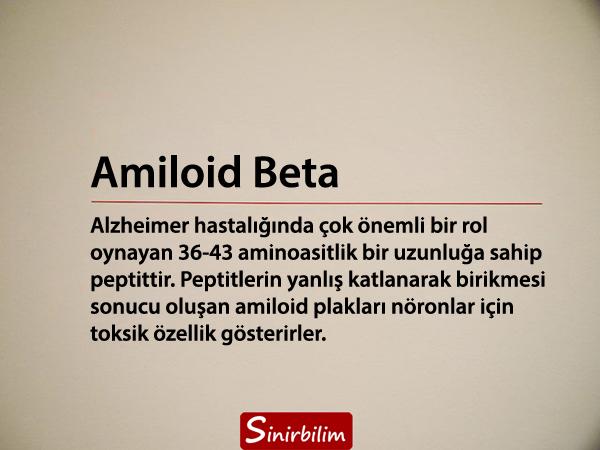 Amiloid Beta Plakları ve Oligomerleri