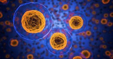 Kalp Hastalıkları CRISPR ile Embriyo Aşamasında Siliniyor