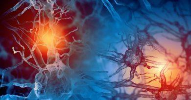 Yeni Beyin Hücreleri Bulundu