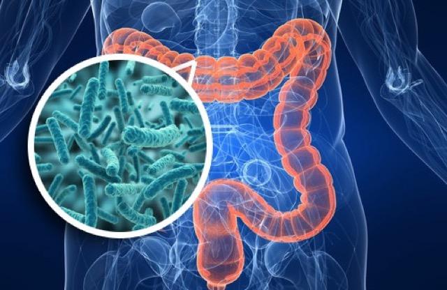 Bozulmuş Mikrobiyota İle Parkinson Habercisi Olabilir