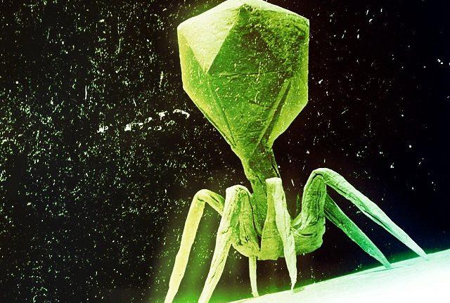 Dünya'daki En Ölümcül Virüsler