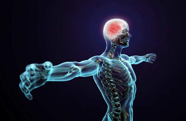 İnsan Vücudu Hakkında Muhtemelen Bilmediğiniz Gerçekler