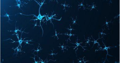 Yaşlılık Yeni Nöron Üretimini Engellemiyor