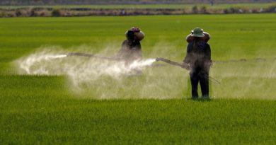 Anne Sütünde Bulunan Pestisitler (Glifosat) Ne Anlama Geliyor?