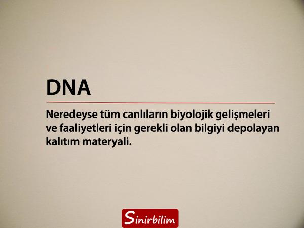 DNA Nedir? DNA'nın Yapısı ve Özellikleri