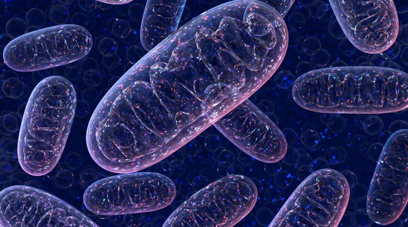 Mitokondri Transferi Nasıl Yapılır?