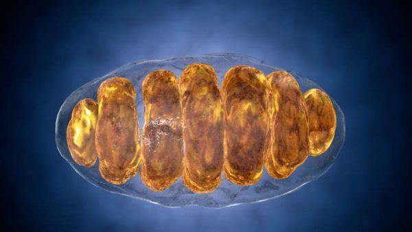 Mitokondriyal DNA Hem Anne Hem Babadan Ortak Aktarılıyor Olabilir
