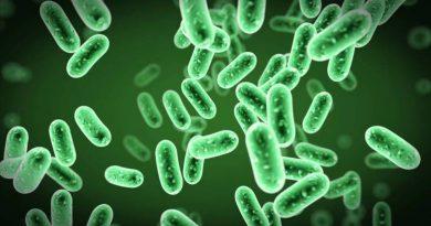Antibiyotik Direncini Kırabilecek Yeni Bir Bakteri Suşu Bulundu