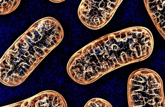 Parkinson Hastalığının Nedenlerinden Biri Mitokondrideki Mutasyonlar Olabilir