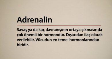 Adrenalin Hormonu Nedir, Hangi Görevleri Vardır