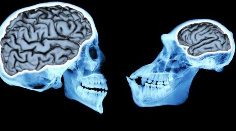 Beynin Evrimi Milyonlarca Yılda Nasıl Gerçekleşti?