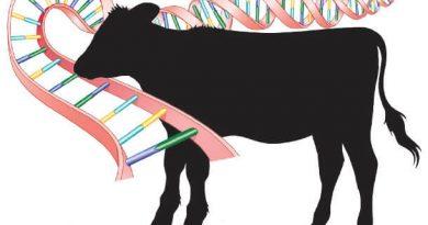 CRISPR ile Değiştirilmiş Bitki ve Hayvanları Yer Misiniz?