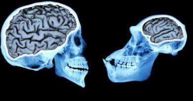 İnsan Beyninin Evrimi Nasıl Gerçekleşti