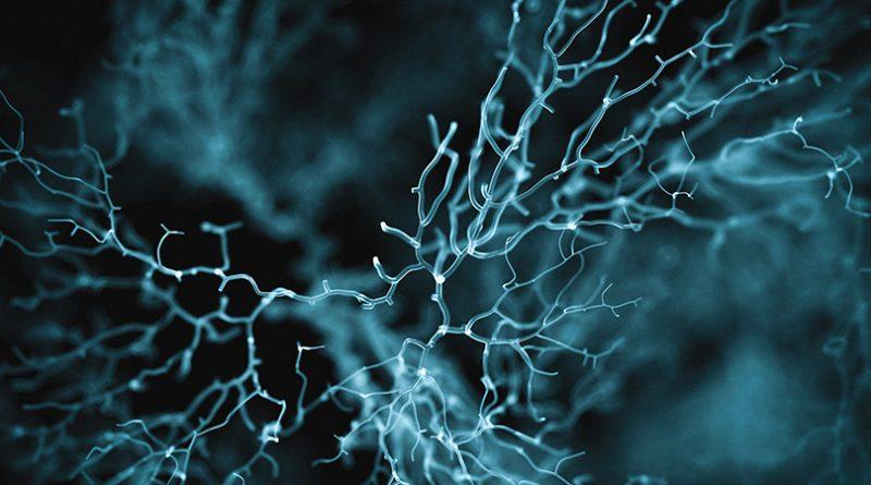 Nöronlarınızın Koruyucu Meleği: Perisitler