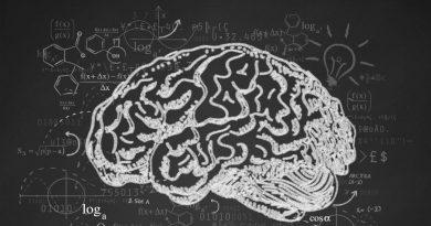 Deneyim Beyni Nasıl Değiştirir?