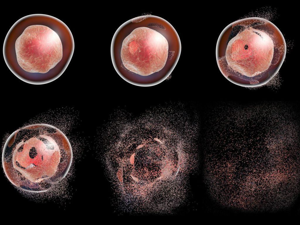 Apoptoz Hücrenin Programlı Ölümü