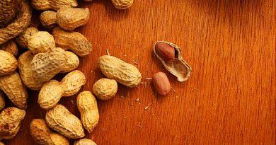 Fıstık Alerjisi Antikor Tedavisi ile Durdurulabiliyor