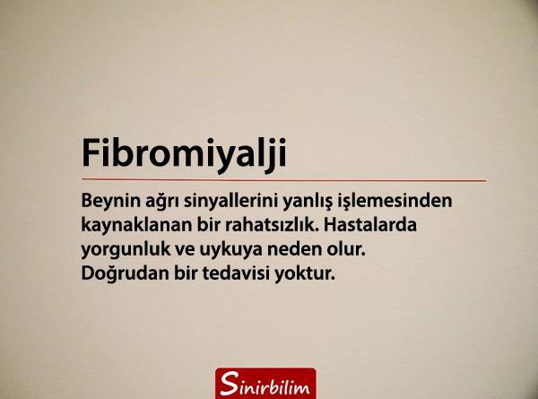 Fibromiyalji Nedir, Neden Ortaya Çıkar?