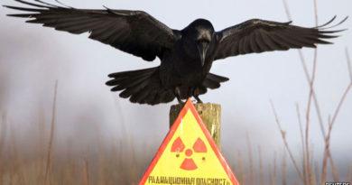 Canlılarda-Radyasyona-Uyum-Sağlama-Yeteneği